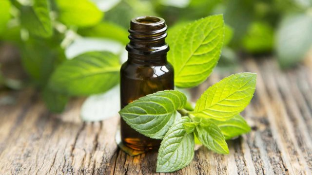 Peppermint essential oil natural health benefits indigestion ibs hair growth.jpg