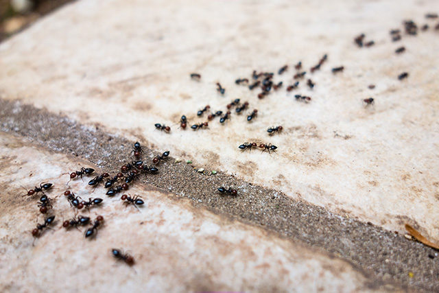 Main_global food retail ants line.jpg