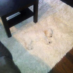 Camouflage animals pets funny 36__605.jpg