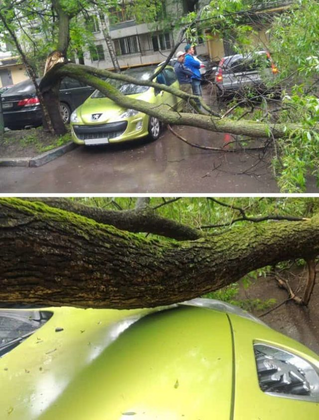 Car an inch away from falling tree.jpg