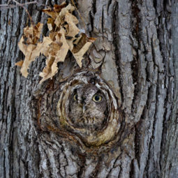 Owl camouflage disguise 13.jpg