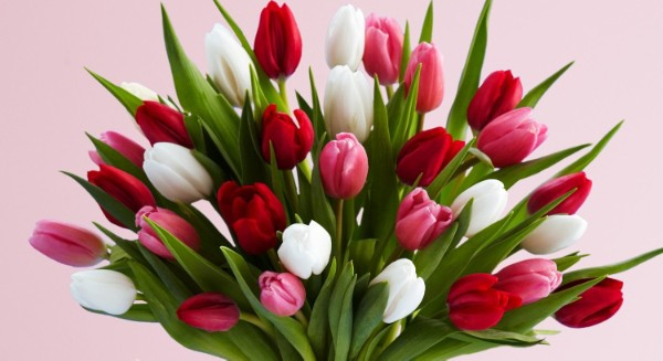 Valentines day tulips guide120823.jpg