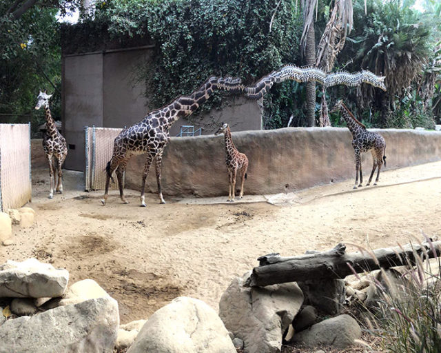 Panorama pictures photobombed by animals 74 5c6d7a5e1e650__700.jpg