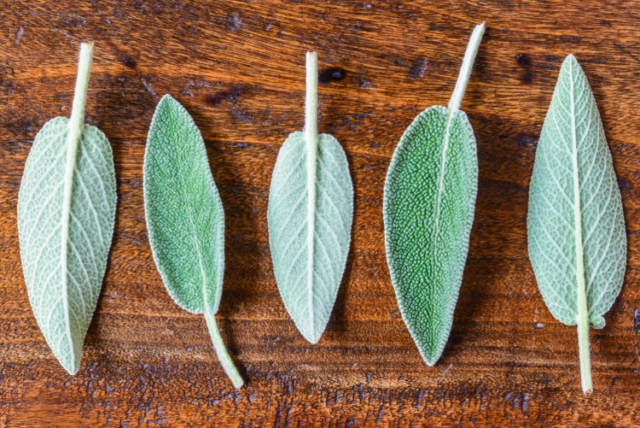 Sage_leaves_final_small.png