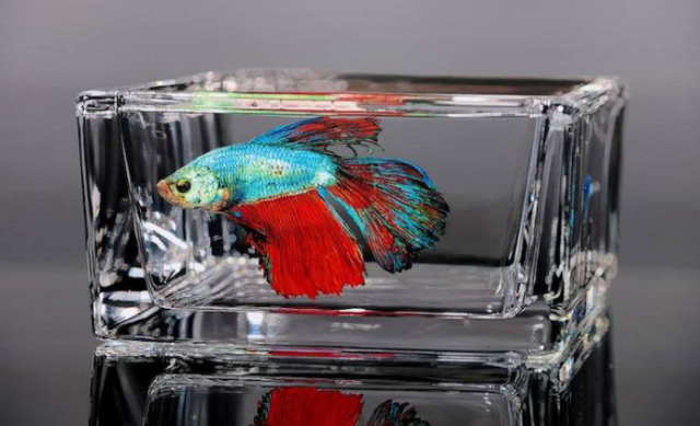 Fish in rectangular glass young sung kim hyperrealism.png