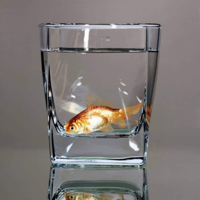 Fish in water glass young sung kim hyperrealism.png