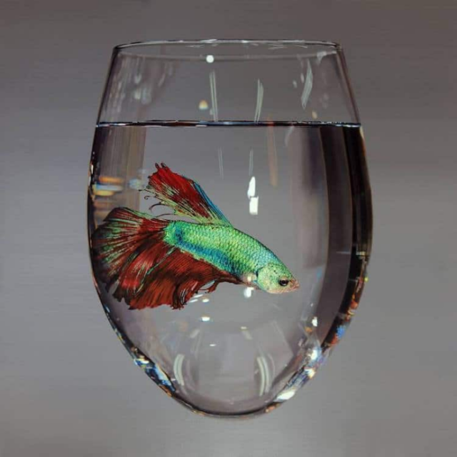 Little fish in water in glass young sung kim hyperrealism.png