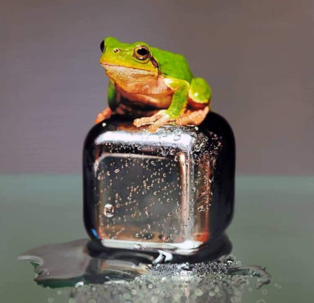 Realistic frog painting young sung kim hyperrealism.png