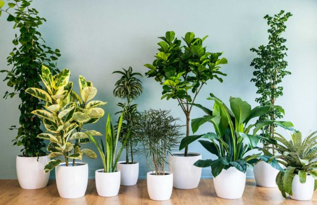 Best indoor plants for everyone.jpg