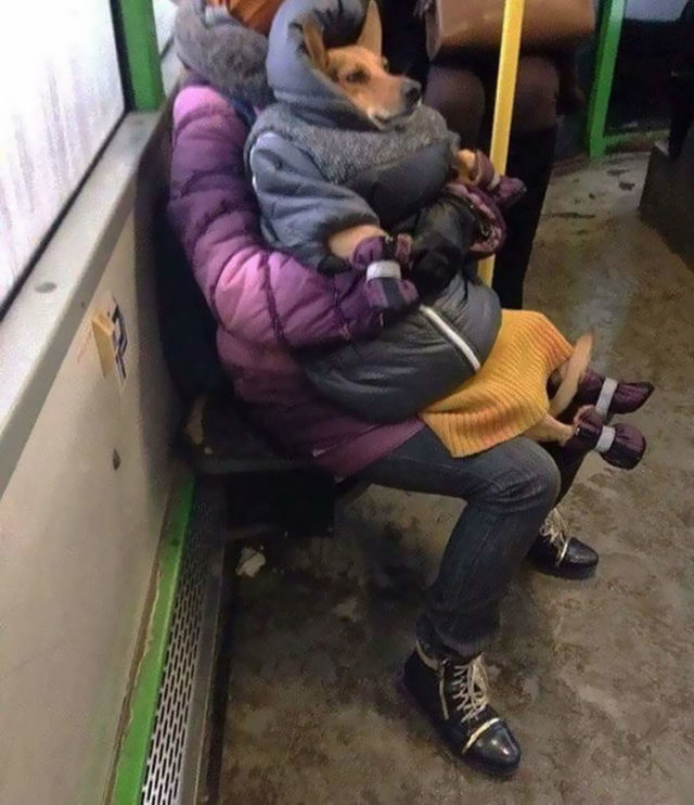 Humans of trolleybuses 320 5dc2872960a4d__700.jpg