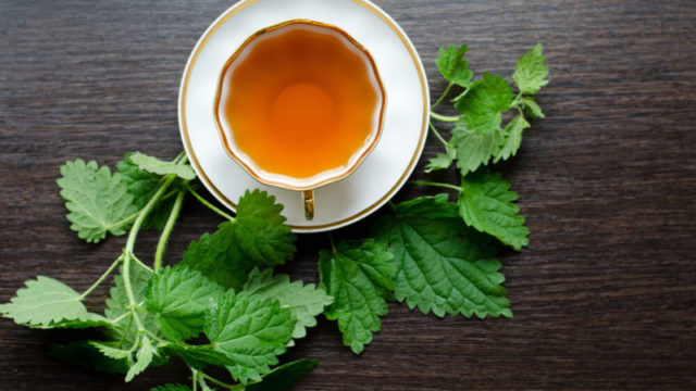 Surprising health benefits of nettle tea_447825919_masha_semenova_ft 800x450