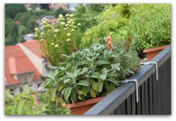 Herbs balcony container.jpg