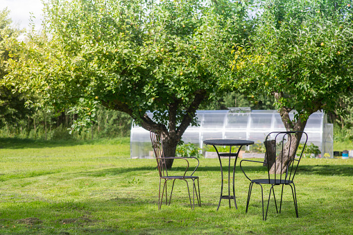 A table in a backyard during a summer day.