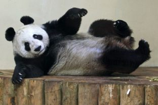 Relax pandy