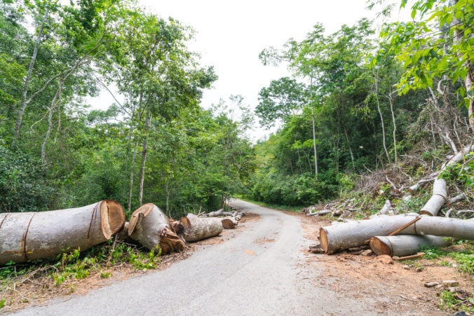 Fallen trees cut to clear path for road through rainforest