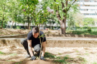 Earth Day, planting the trees