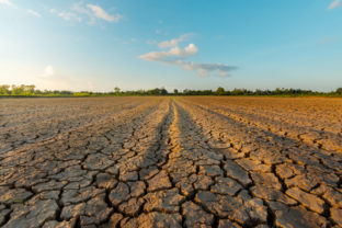 The land is dry and parched because of global warming.