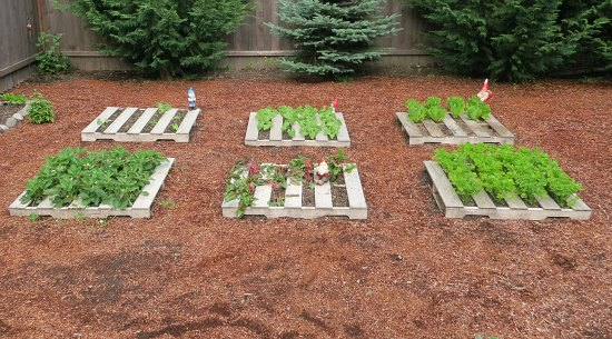 Make an organic garden with your pallets 1.jpg