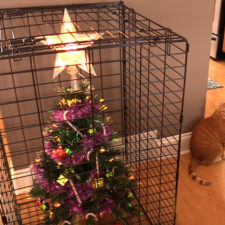 Protecting christmas tree from dogs cats pets 4 585a611c97b73__605 1.jpg