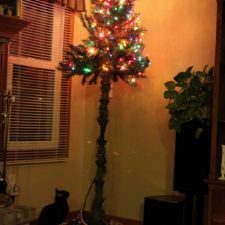 Protecting christmas tree from dogs cats pets 5 585a660de18de__605.jpg