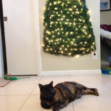Protecting christmas tree from dogs cats pets 6 585a66c36e602__605.jpg