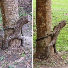 Pareidolia trees look like something else 1 59e739b38af51__700.jpg