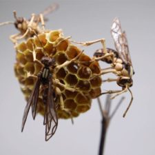 The japanese artist who creates life size insects exclusively from bamboo will impress you 59e0884e5918b__880.jpg