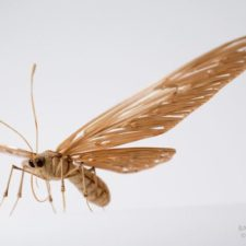 The japanese artist who creates life size insects exclusively from bamboo will impress you 59e089d0e2125__880.jpg